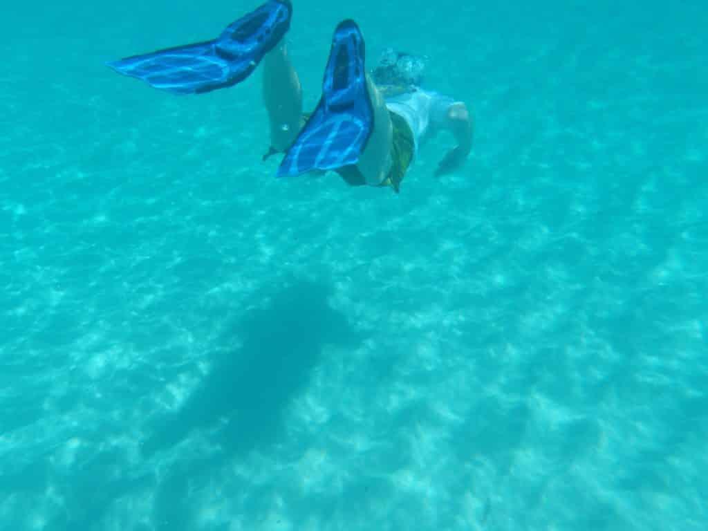 Schwimmflosse